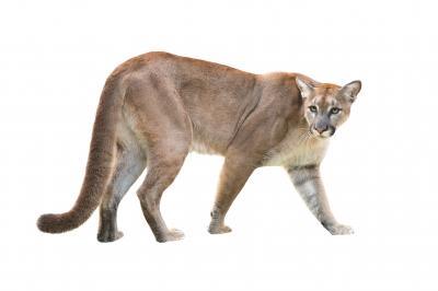 PUMA: Wild Beasts