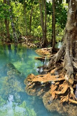 drain the swamp?