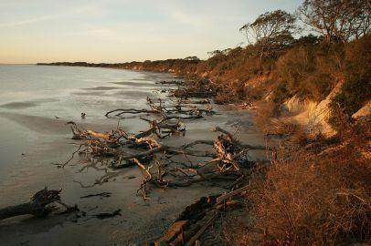 driftwood/flotsam