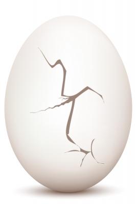 cracked egg: cracking up